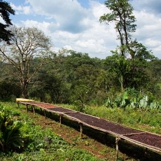 Kaffee Aus Dem Wald   Kochenergie Aus Kaffeeschalen